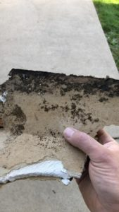 mold removal and remediation in st louis mo