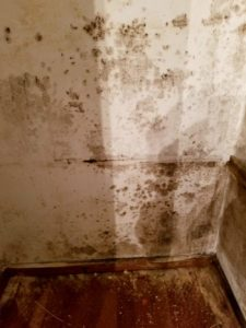 st louis mold removal